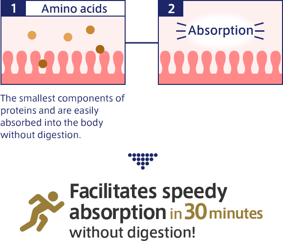 1. Amino acids The smallest components of proteins and are easily absorbed into the body without digestion. 2. Absorption > Facilitates speedy absorption in 30 minutes without digestion!